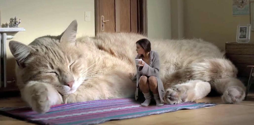 кошка главная в доме