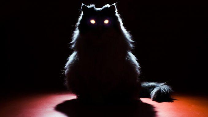 у кошек в темноте глаза светятся
