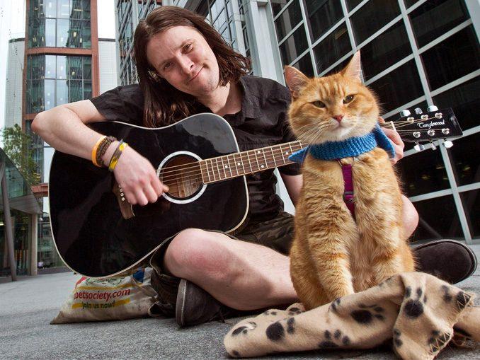 человек и кошка