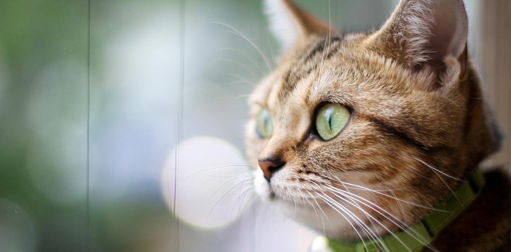 кошка смотрит в пустоту