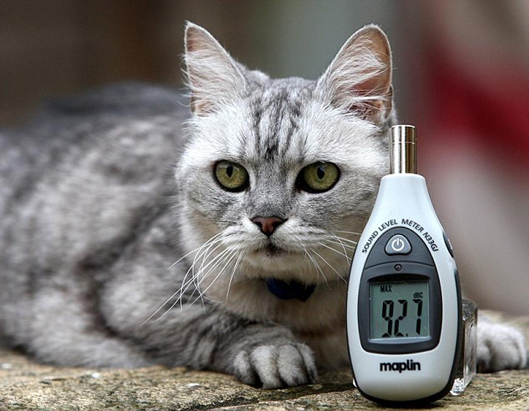самый громкий кот