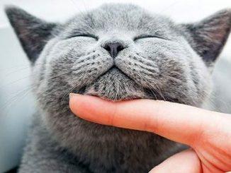 кошки мурлычат