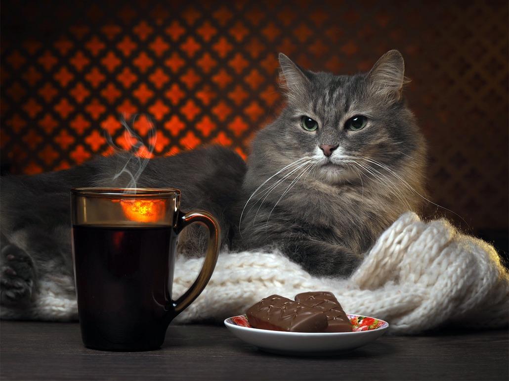 кошка и шоколад