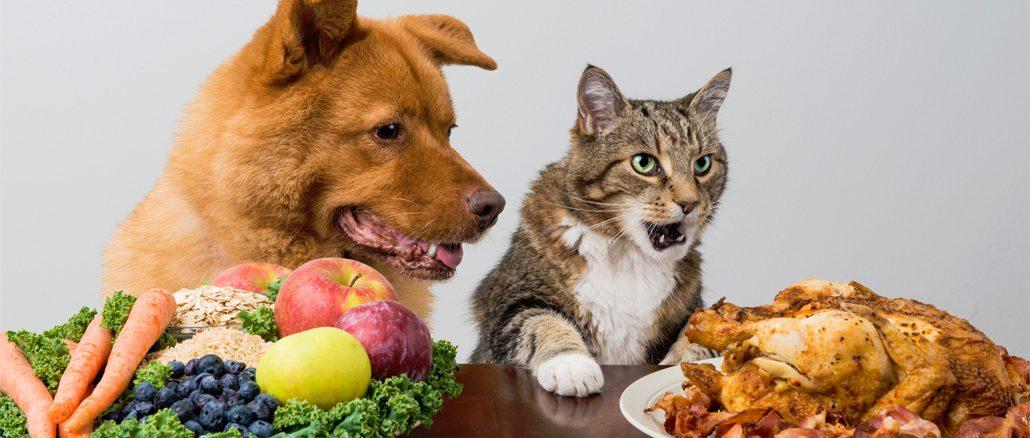 кошка и корм для собак