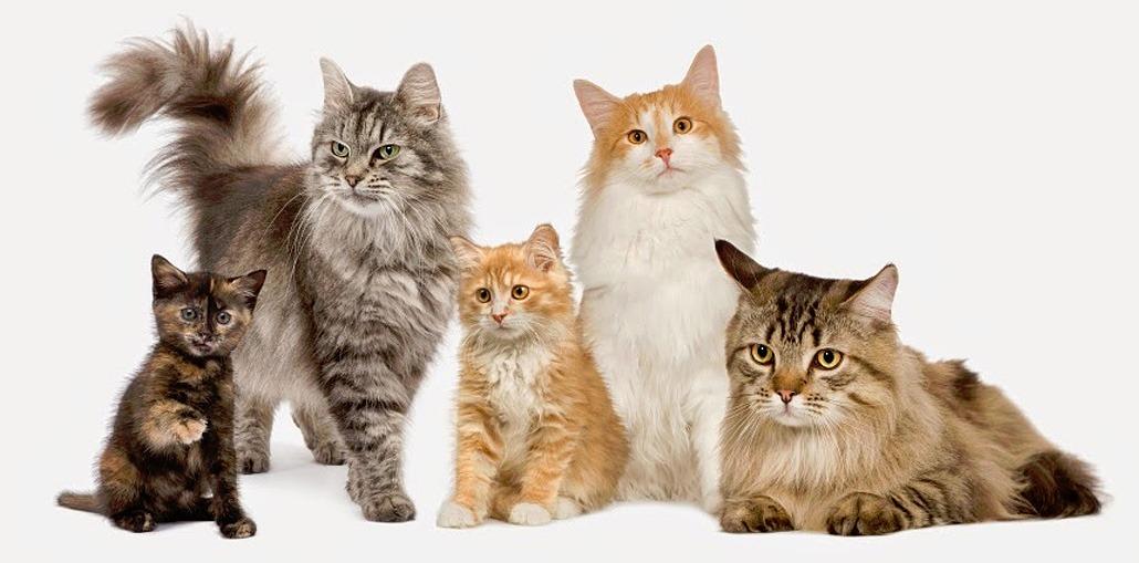этапы жизни кошек и котов