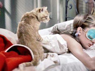 кошки мнут лапками