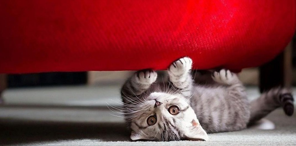коты топчут лапками