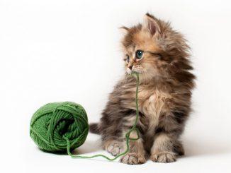 кота тошнит шерстью