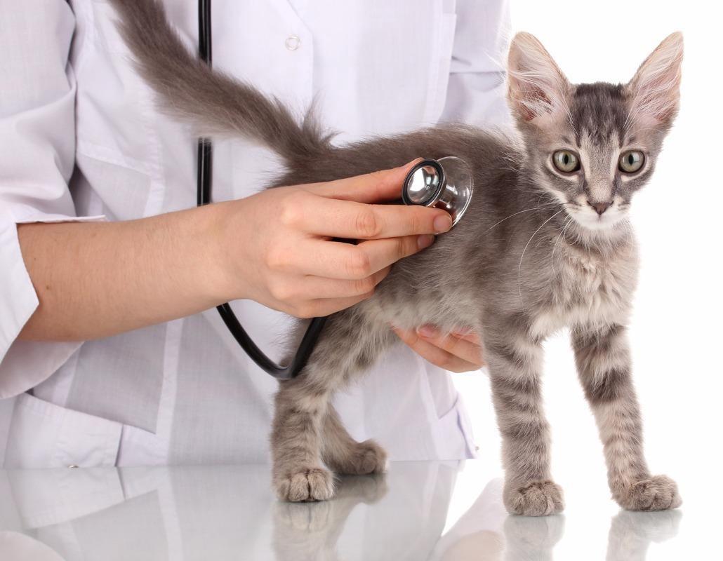 питание кошек при болезнях