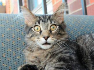 интересные факты о кошках (subjects)